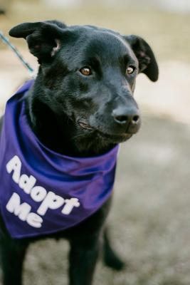 Pet_Adoption